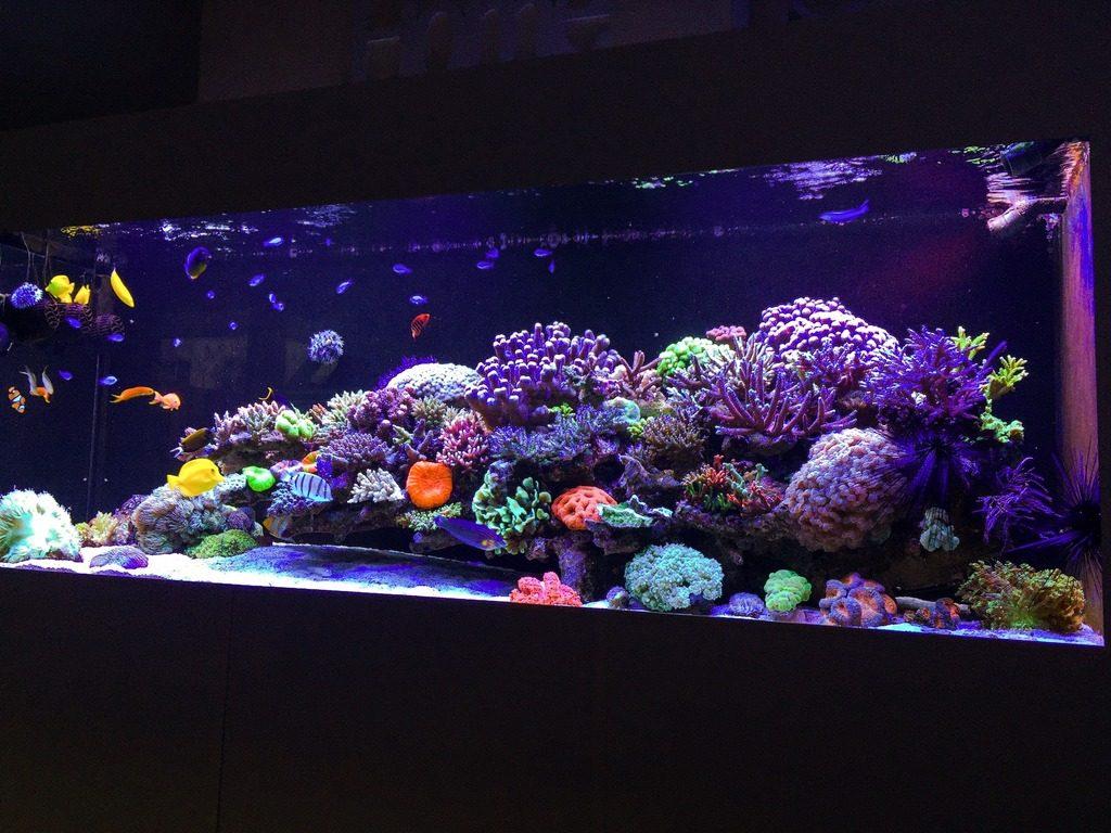 wesley vrsswijk tank - reefs
