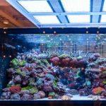 The Incredible Aquarium of De Jong MarineLife