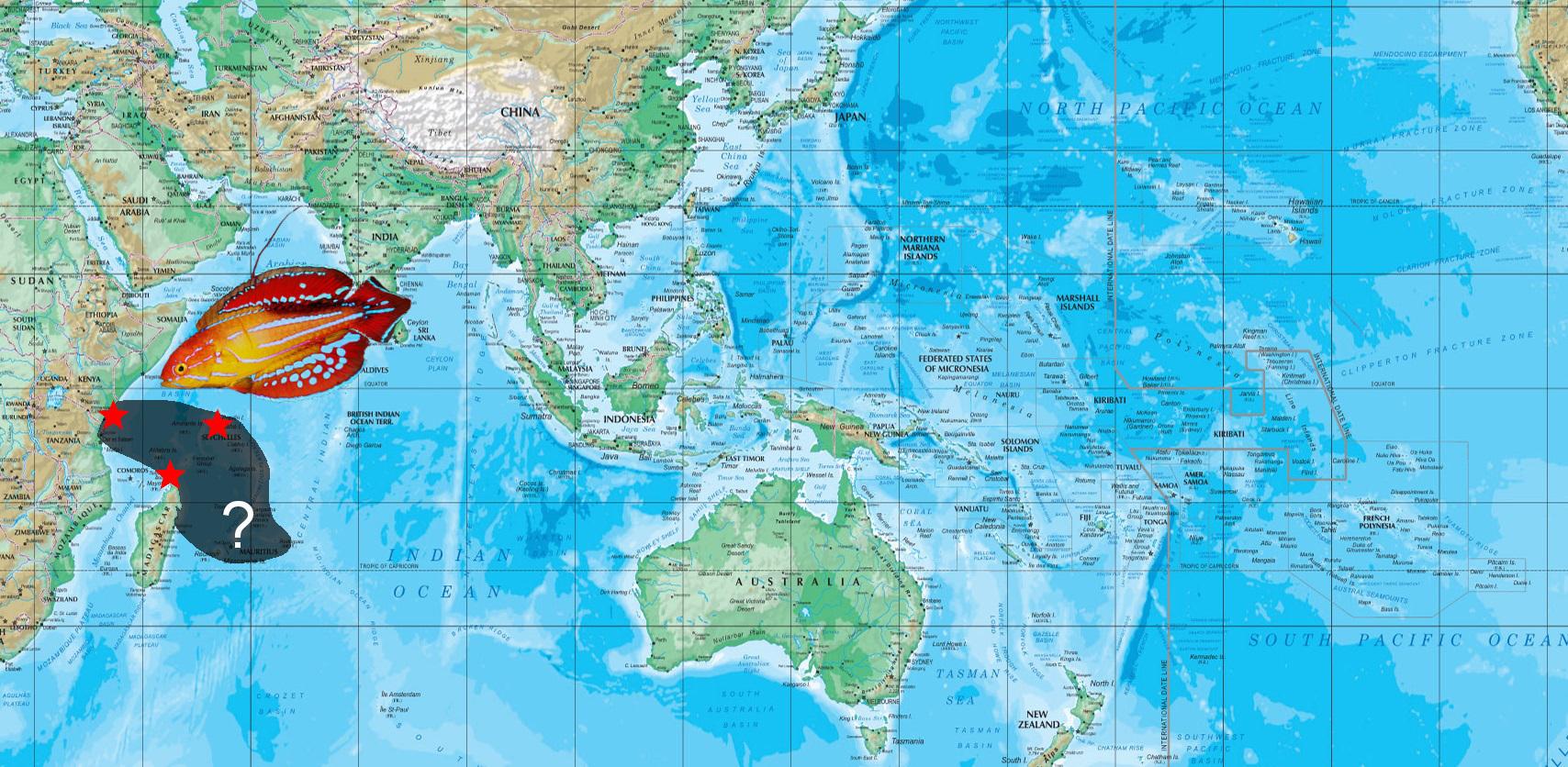 attenuatus map2