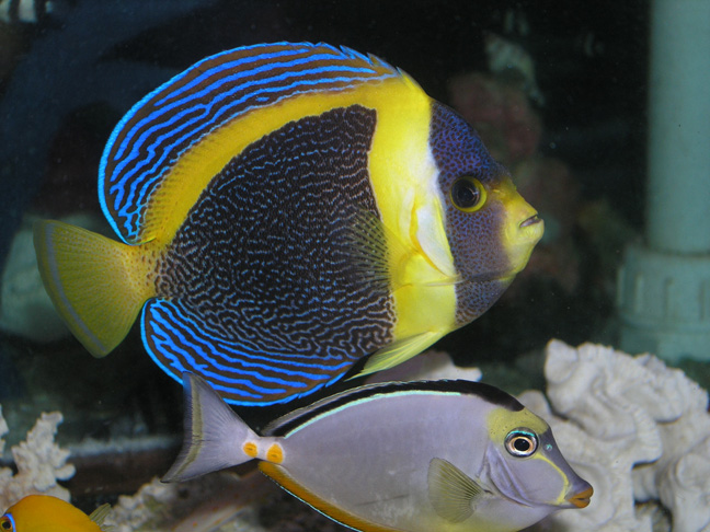 scribbled angel reefs com