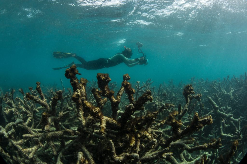 Photo made available by the XL Catlin Seaview Survey shows coral mass mortality at Lizard Island, Great Barrier Reef, amidst the ongoing 2014-2016 global bleaching event. This is the longest lasting and most geographically extensive coral bleaching event in the history of reef research.