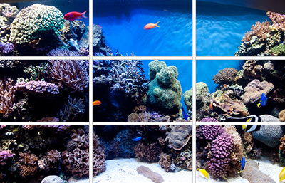Charming Using The Rule Of Thirds To Aquascape Your Reef Will Create A More Visually  Appealing Aquarium