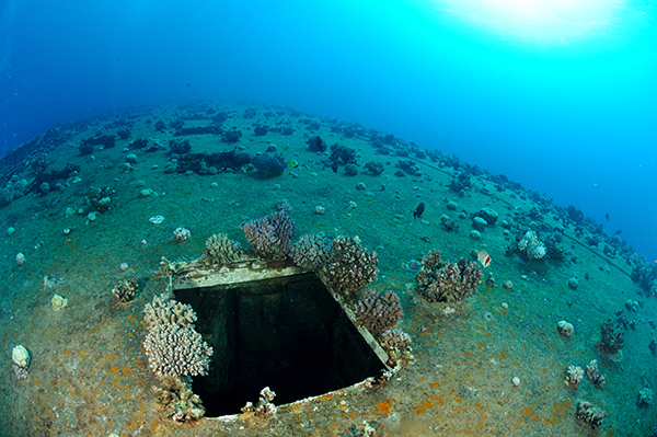 A hatch on the Salem Express's hull. Has this area become more easily colonised due to a change of hull metal or due to currents around the hatch itself?