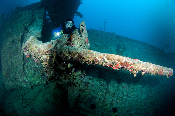 A mixture of rust and encrusting life is cloaking this anti aircraft gun on the SS Thistlegorm.