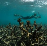 diver chrismaupin - reefs