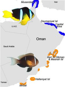 Distribution of A. omanensis & A. clarkii. Map modified from Burt et al 2015