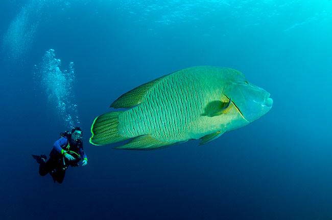 My fish-eye lens is making this fish look WAY too big
