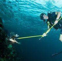 lionfish richardaspinall - reefs