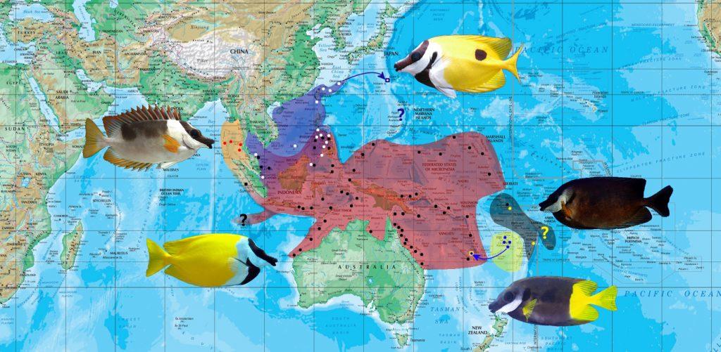 siganus map