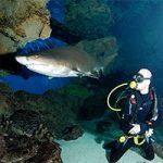 Aquarium diving