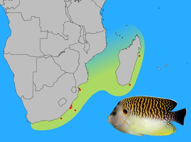 apolemichthys-kingi-map