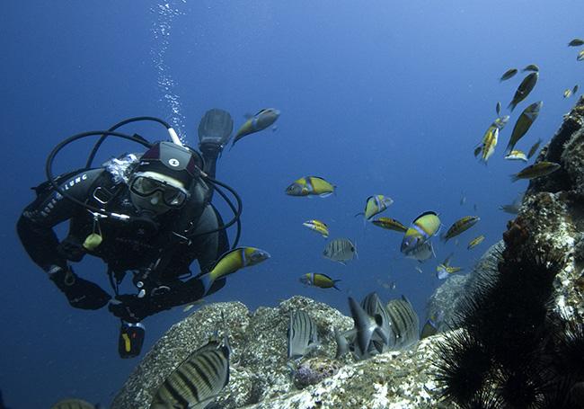madeira june 06 - underwater - diver