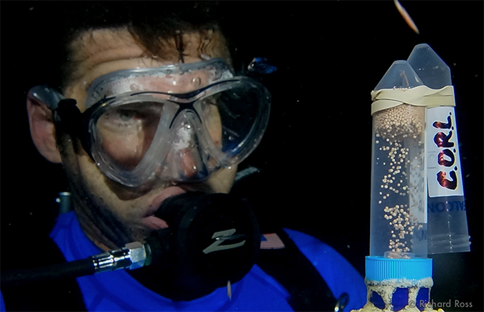 Rick Klobuchar monitors coral sperm/egg bundles filling up a collection container. Photo by Rich Ross.