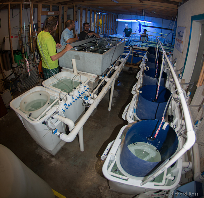 This is the wet lab where baby corals are monitored and pampered all day and night. This lab is almost completely built and torn down every year. Photo by Rich Ross.