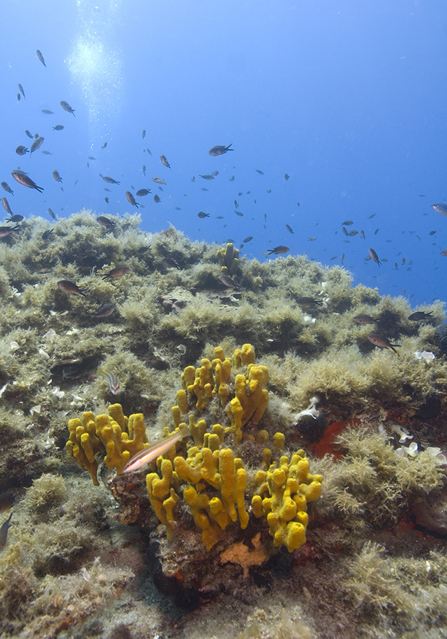 Typical wrasse habitat in the Med.