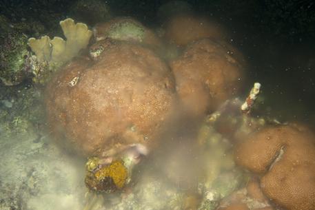 starlet-reefs