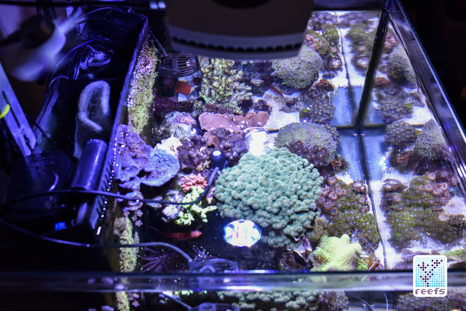 PMK Probe in my tank. I opted for installing it without the rock due to lack of space