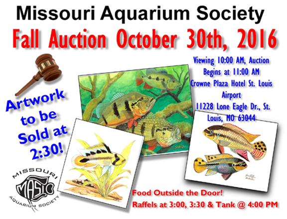 mas-fall-auction-reefs