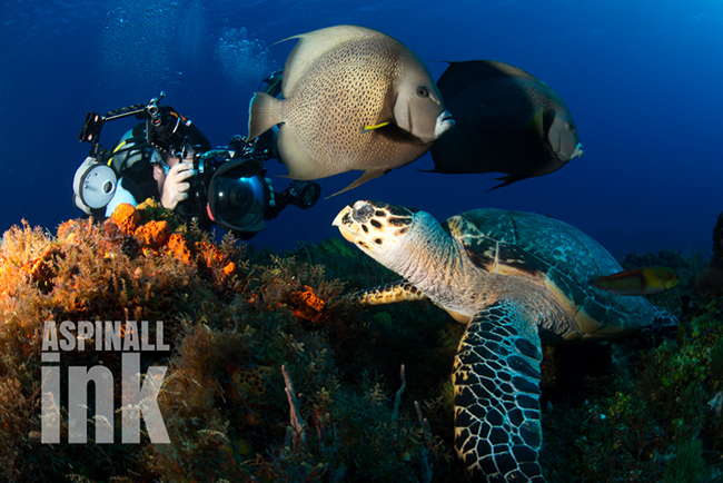Grazers (of all types) are valuable on reefs.