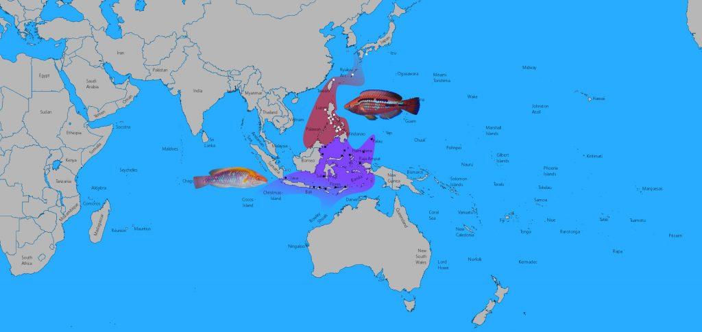 lubbocki-map