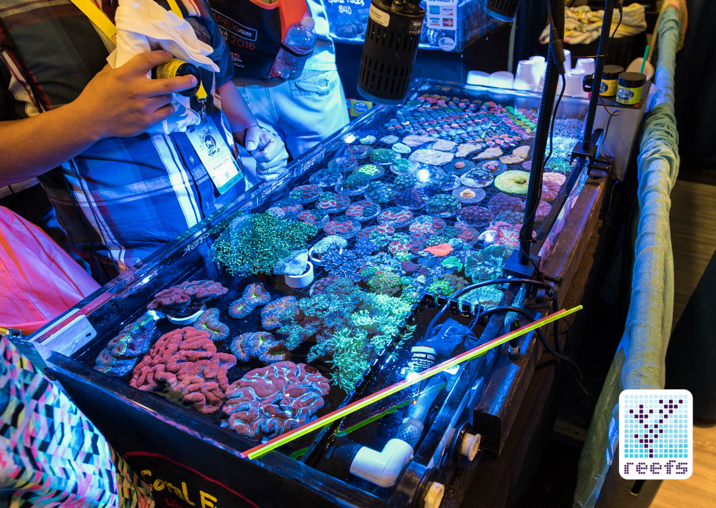Beautiful corals dominated local retailers' booths