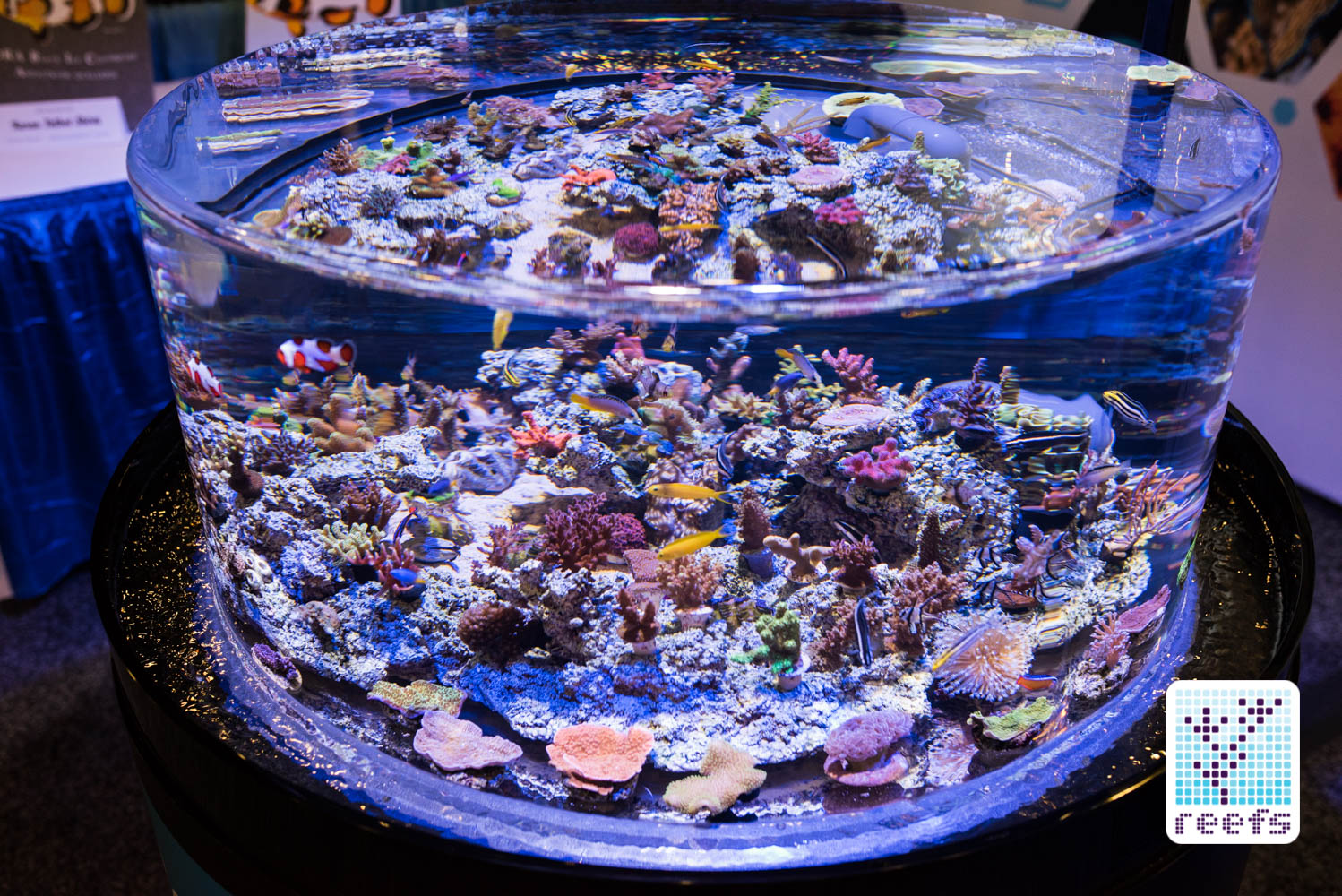 ORA display tank, featuring captive bred corals and fish