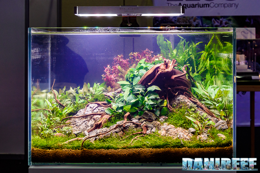 201610-aquascaping-elos-layout-petsfestival-228-copyright-by-danireef