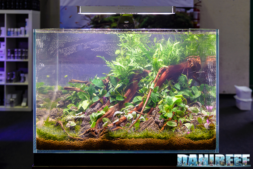 201610-aquascaping-elos-layout-petsfestival-261-copyright-by-danireef