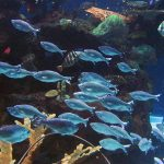 Life After Purchase: A Guide to Introducing New Fish to Your Aquarium's Social Dynamics