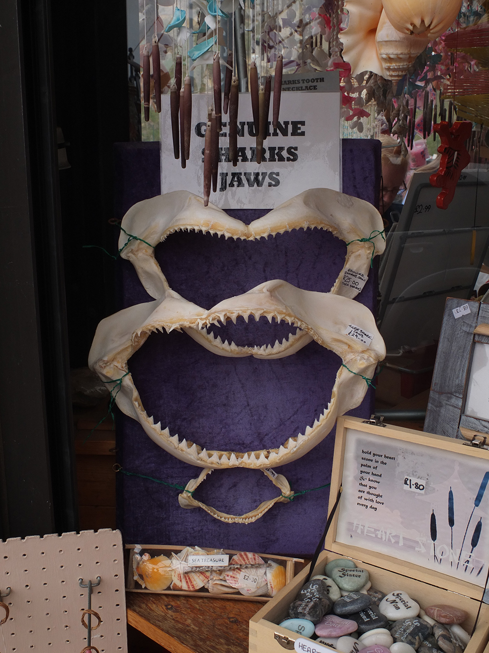 Listed as 'near threatened' by the IUCN, these Tiger Shark jaws were on sale in the UK. I was asked niot to go into the shop and shout.