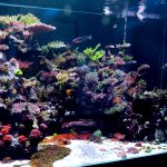 Tanks: World Wide Corals' 900g Aquacultured Grow Out Tank