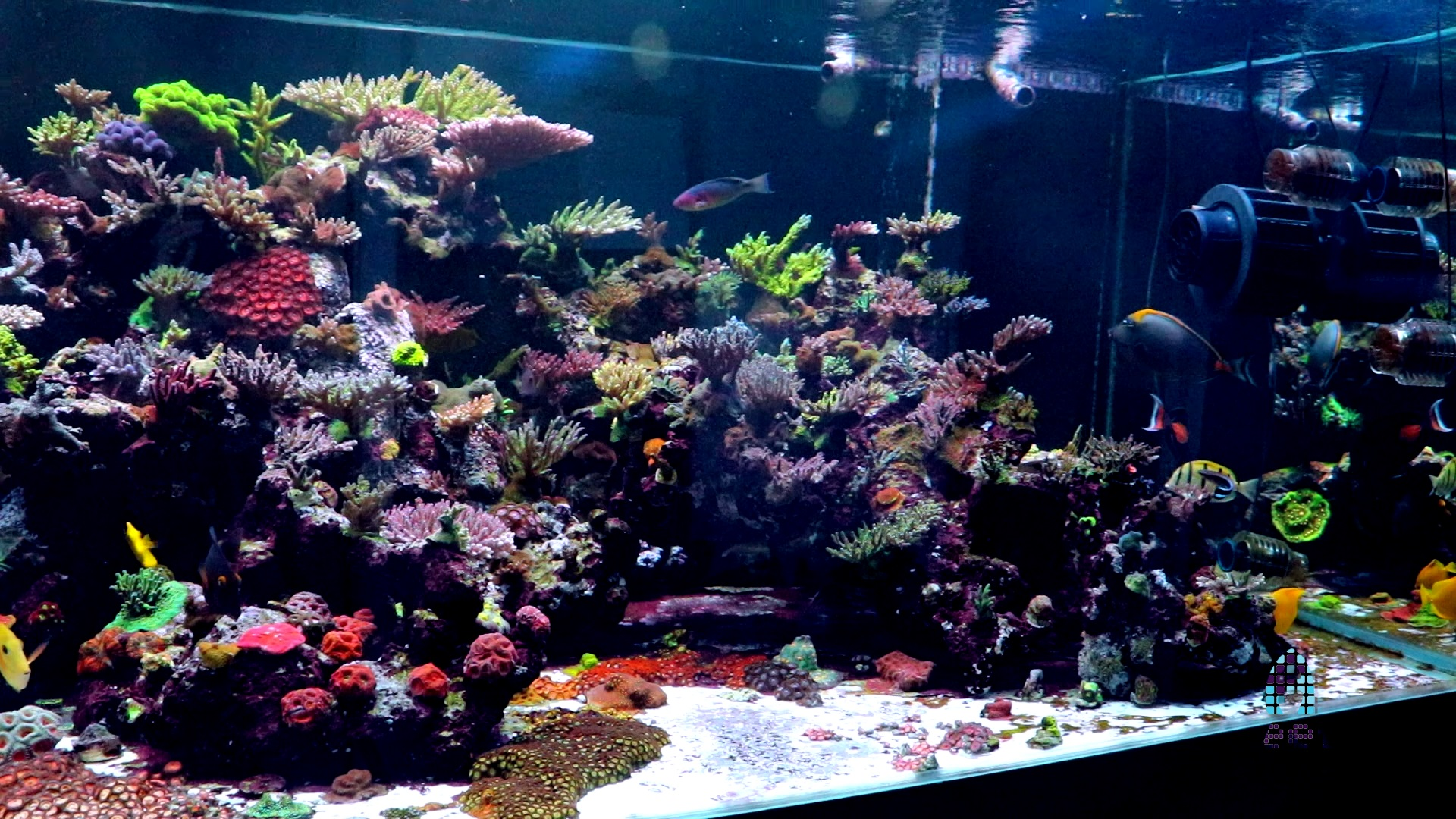 Picture of WWC's 900g Aquacultured grow out tank.