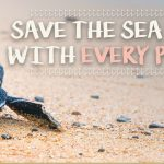 Save Sea Turtles While you Shop