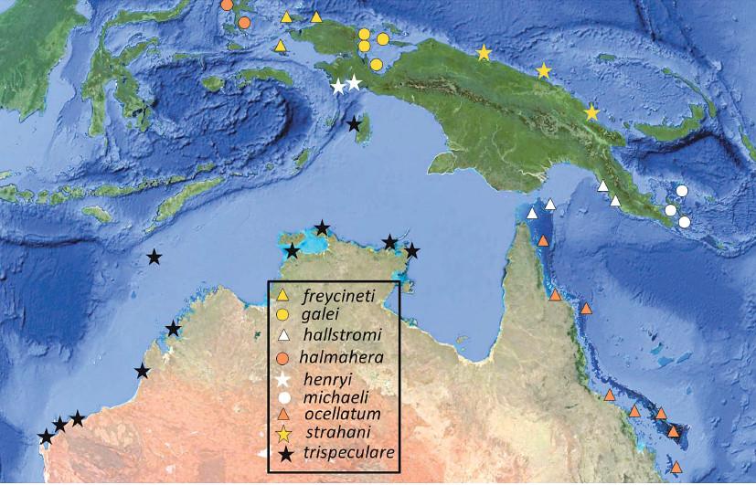 Map of the Australia-New Guinea region showing distributions of species of Hemiscyllium. Credit: Allen et al 2016