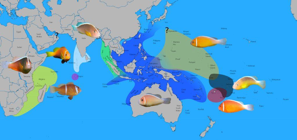 perideraion-map