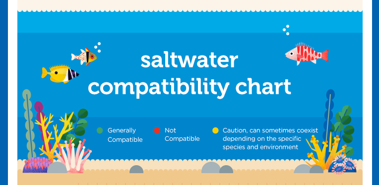 Prevent a salty situation which saltwater fish are for Saltwater fish compatibility chart