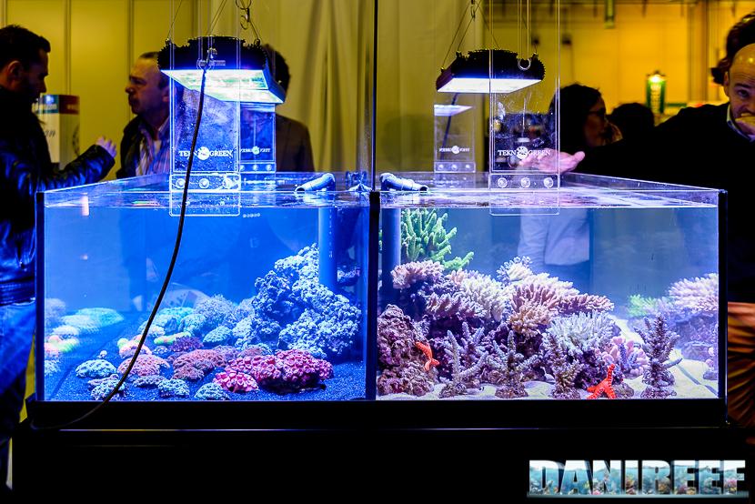 201610-barriera-corallina-coralli-layout-petsfestival-230-copyright-by-danireef