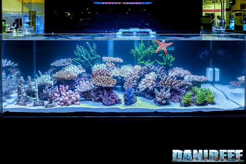 201610-barriera-corallina-layout-petsfestival-tekno-green-128-copyright-by-danireef