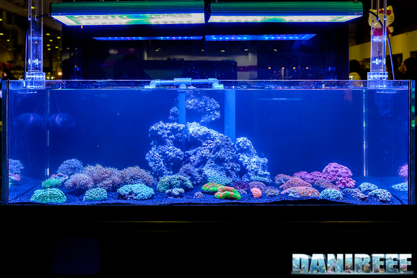 201610-barriera-corallina-layout-petsfestival-tekno-green-130-copyright-by-danireef