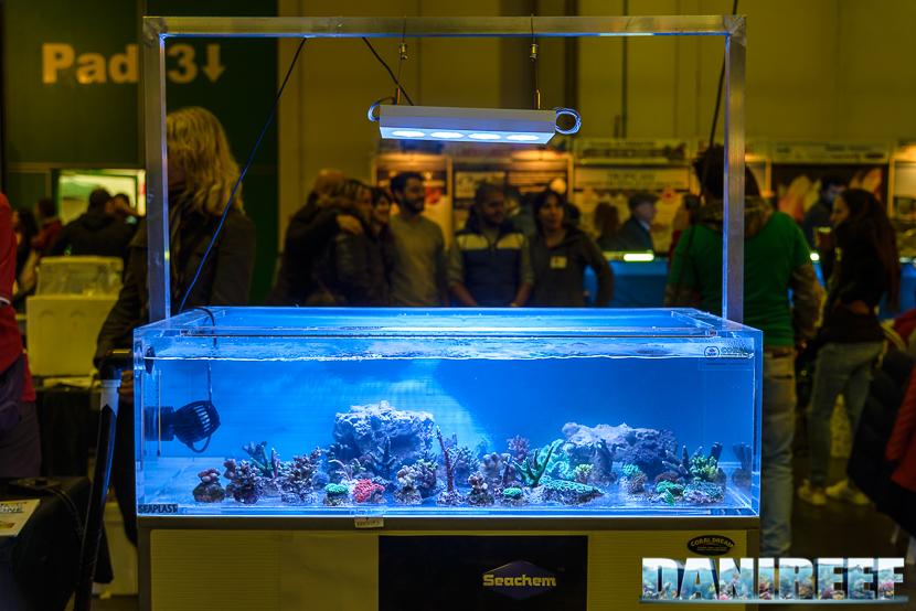 201610-coraldream-petsfestival-255-copyright-by-danireef