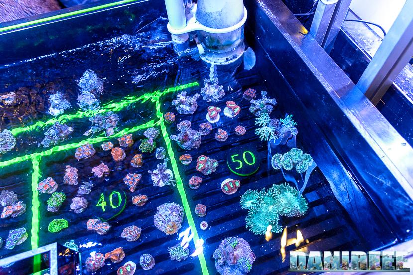 201610-coralli-petsfestival-reef-joker-50-copyright-by-danireef