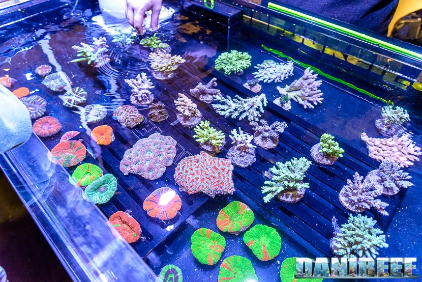 201610-coralli-petsfestival-reef-joker-52-copyright-by-danireef