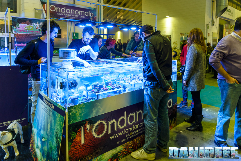201610-ondanomala-petsfestival-73-copyright-by-danireef