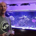 Reef Tips: Glue or Epoxy? (Gorgonians anyone?)