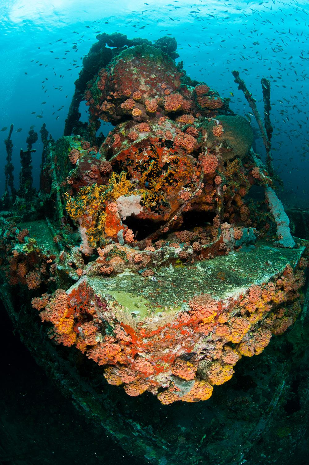 shipwreck reef Tubastrea
