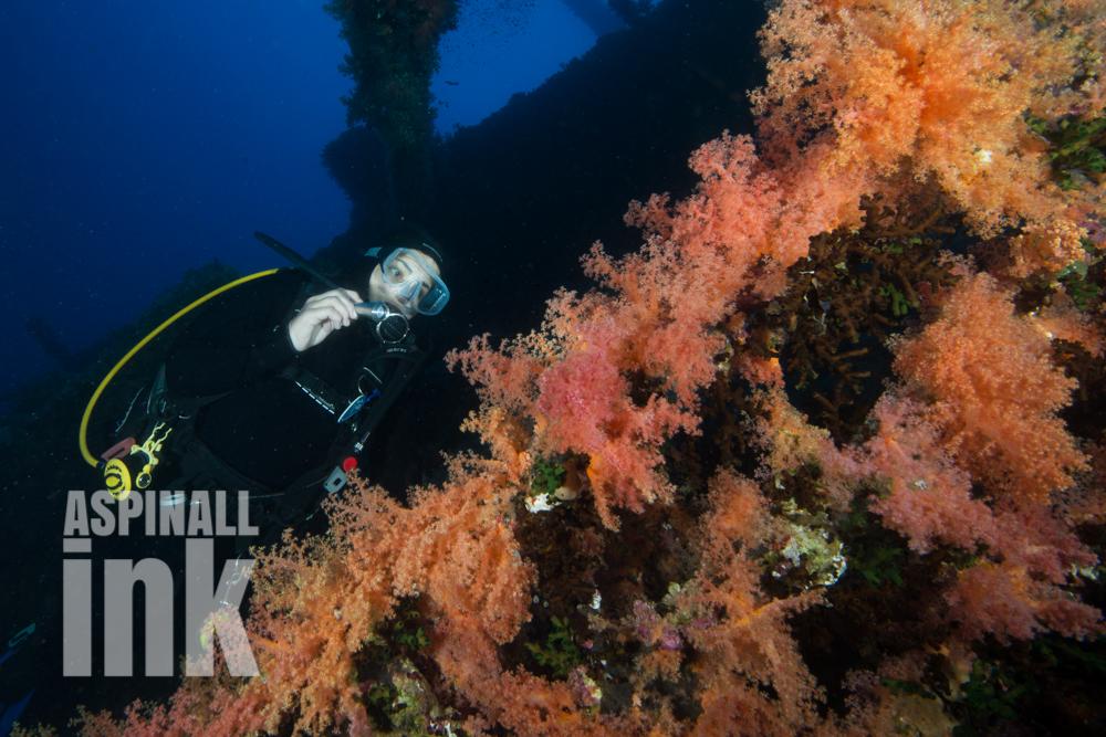 Tubastrea micrantha, sun coral