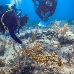 Coral Restoration Foundation Receives $2.1 Million Grant