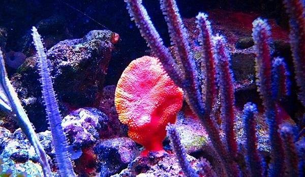 aquarium sponge