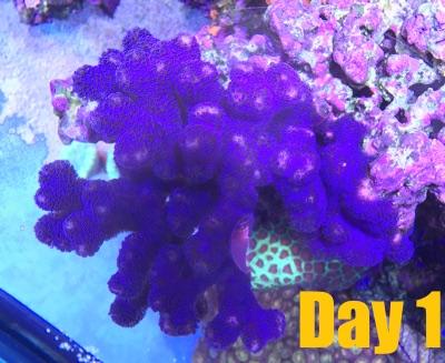 mrsaltwatertank-webinar-1-reefs