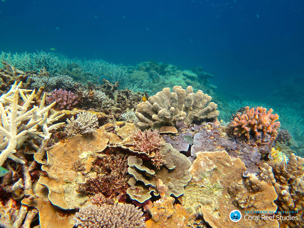 Healthy Coral in the Capricorn Group of Islands, Southern Great Barrier Reef, November 2016. Credit: Tory Chase, ARC Centre of Excellence for Coral Reef Studies.